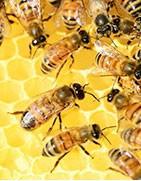 Sélection de nos meilleurs miels chez Vintage Select