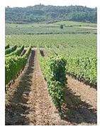 Choisissez votre vin en ligne par domaine